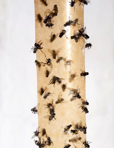 Липучки от мух 110
