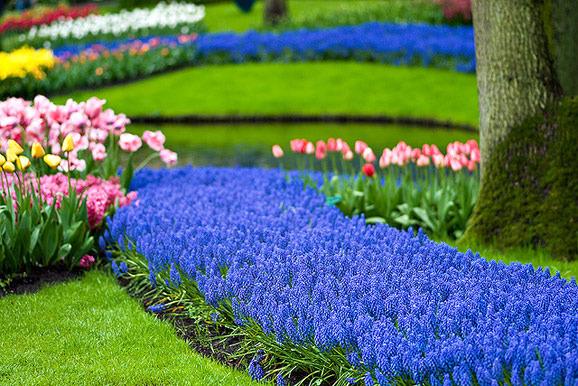 Невысокие цветы
