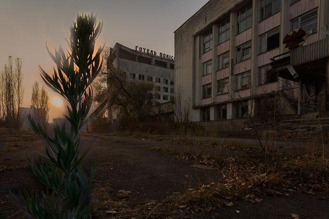 Чернобыль город и трава