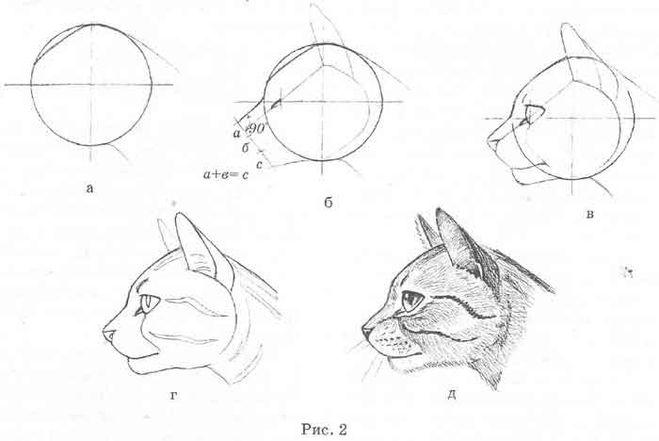 Морда кота поэтапно карандашом