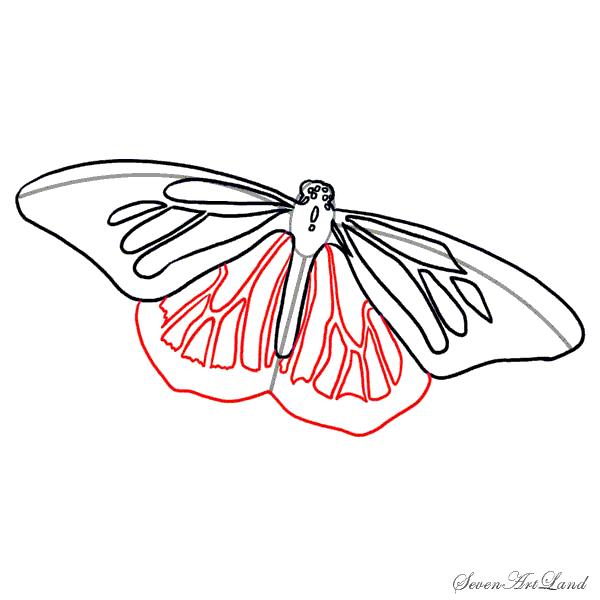 Рисунок на крыльях бабочек