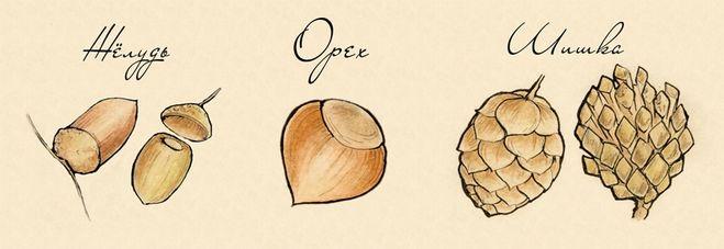 Орехи афродизиаки фото