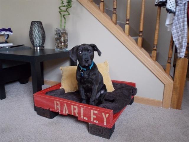 лежак для собаки из паллет