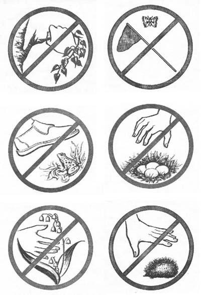 Раскраски что нельзя делать в лесу