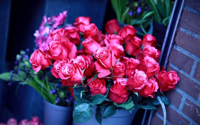 Какие цветы лучше дарить на 8 марта