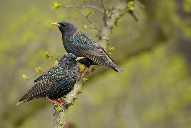 Рассказ о поведении птиц зимой 2 класс окружающий мир