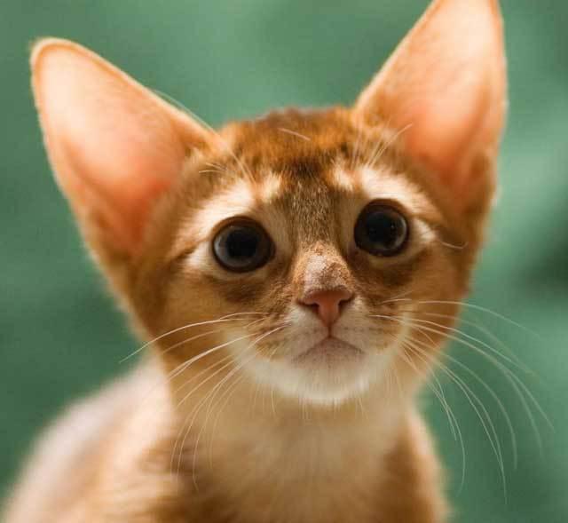 Кошка может просто погибнуть от истощения
