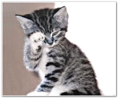 Коты не плачут
