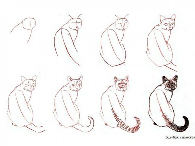 схемы, для рисования кошки