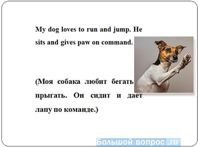 презентация про домашнего питомца на английском языке слайд