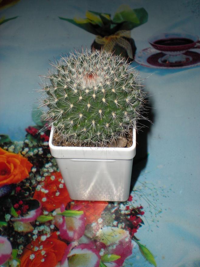 Грунт для кактусов