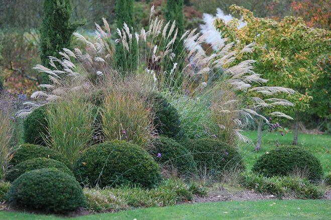 Декоративные трава для клумбы фото и названия