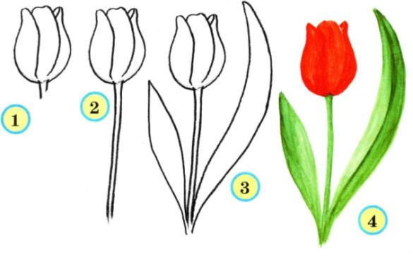 Василек цветок картинка для детей