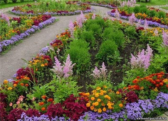 Как вырасти цветы семена цветов