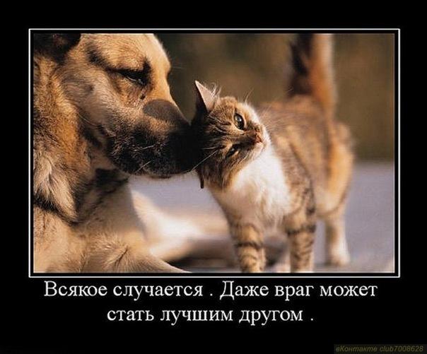 Как кошка с собакой афоризм