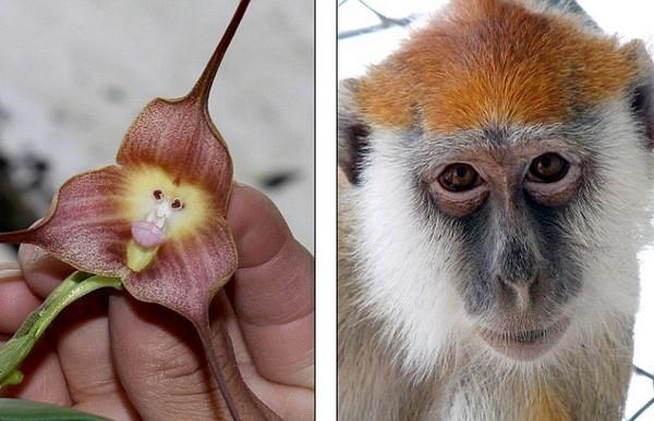 Как сделать что бы зацвела орхидея