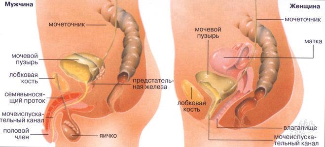 mozhet-li-chastaya-masturbatsiya-privesti-k-tsistitu