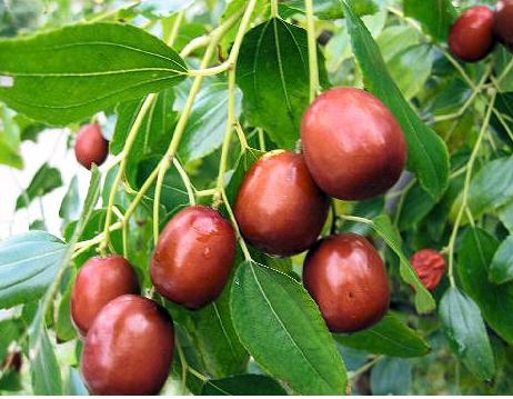 Ягоды, плоды