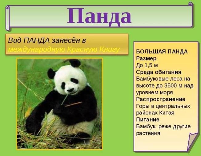 Доклад о редком животном из красной книги 7659