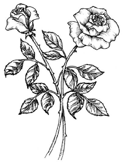 ... цветка.Затем делают штриховку если: www.bolshoyvopros.ru/questions/164922-kak-narisovat-rozy-v-bukete...