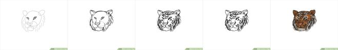 как нарисовать голову тигра поэтапный урок