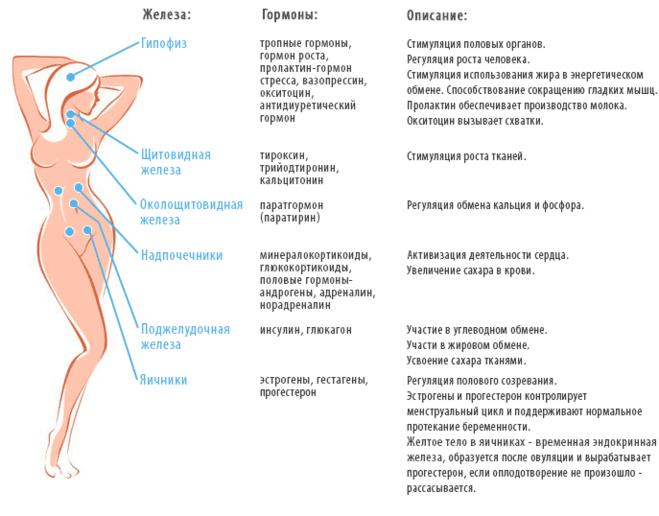 obmen-gormonami-pri-sekse