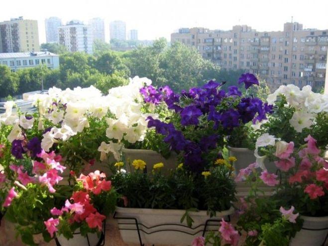 Какие цветы сажают в квартире 100