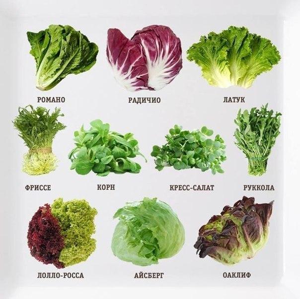 Салат как выращивать сорта