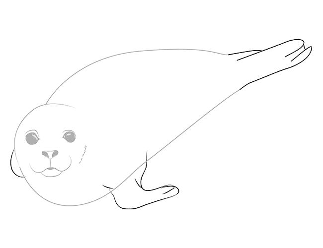 как рисовать тюленя 4