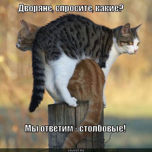столбовые дворяне на Руси, смешные фото котов