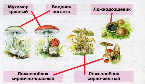 Названия растений из красной книги в картинках