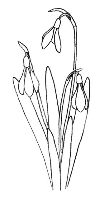 Как нарисовать подснежник карандашом поэтапно