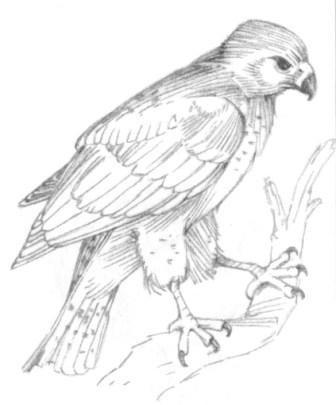Орел готов с помощью поэтапных