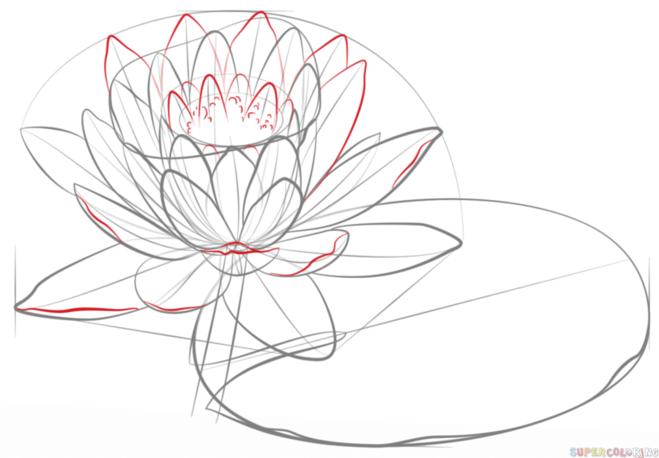 как нарисовать водную лилию 7