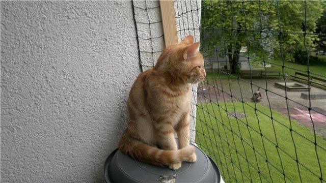 Безопасные прогулки кошек на балконе..