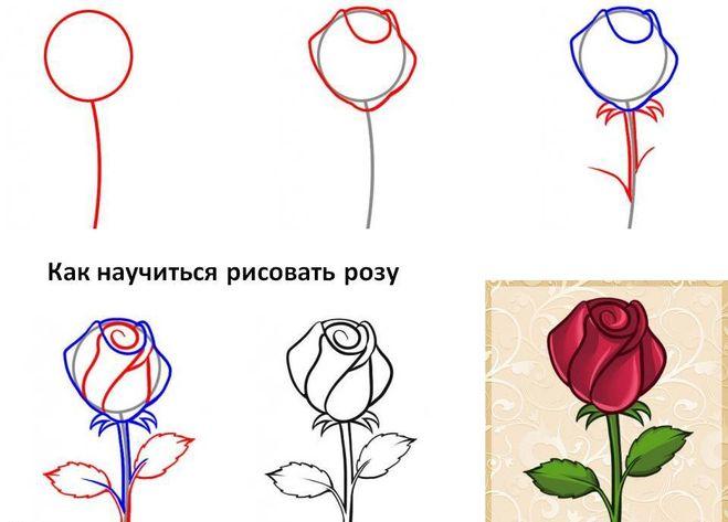 Теперь роза в горшочке,