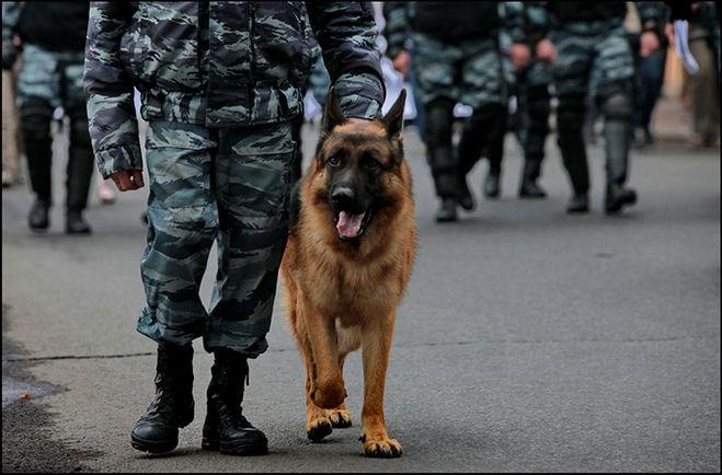 собаки на службе у человека