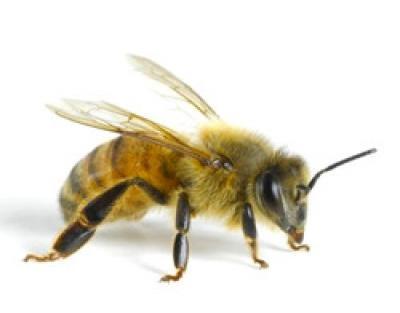 Лекарства от аллергии от укуса пчел