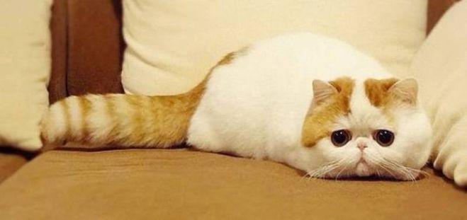 Кот снупи в украине