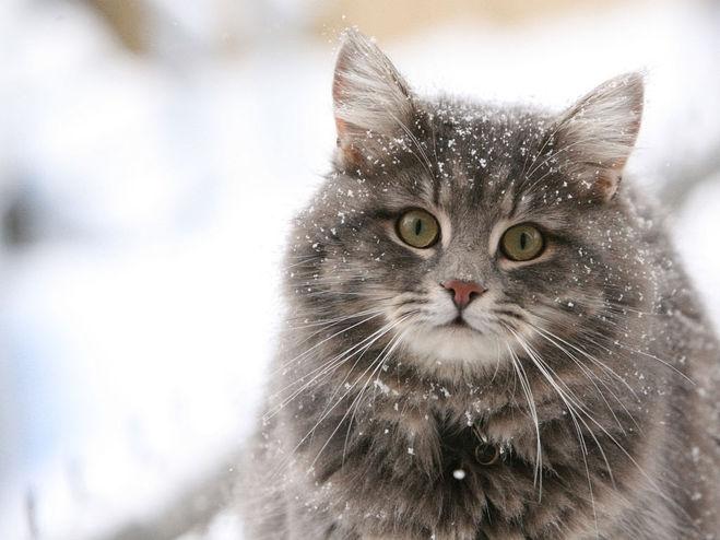 Кошка; Чёрная кошка; Приметы; Кот