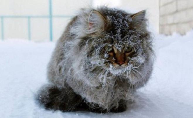 городская кошка