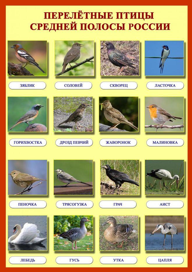 Картинки какие птицы прилетают весной