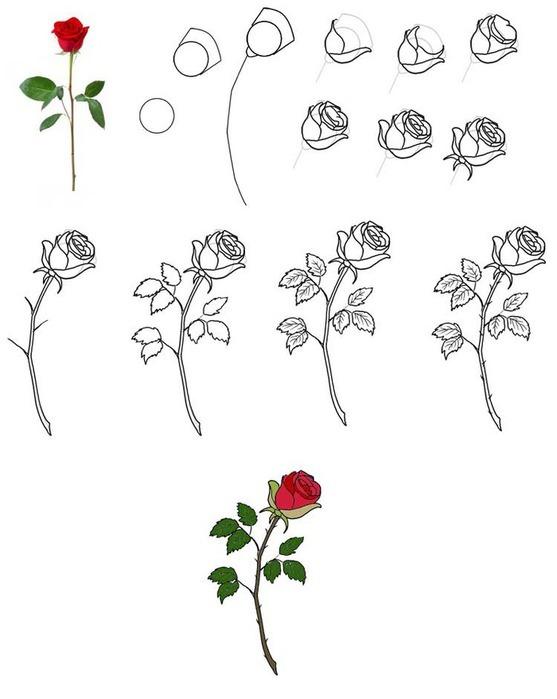 этот красивый цветок розу.