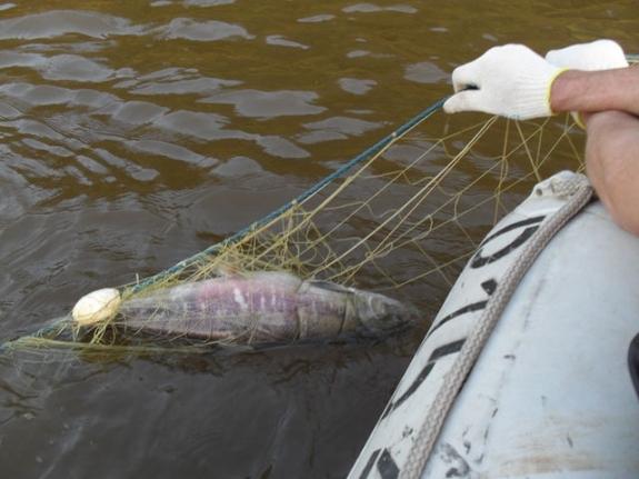 запрет на ловлю рыбы в башкирии 2017