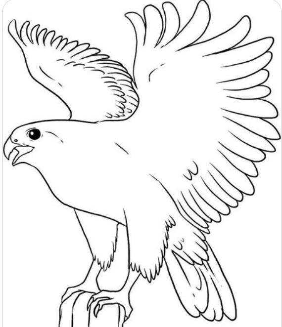 Как нарисовать сокола в полете
