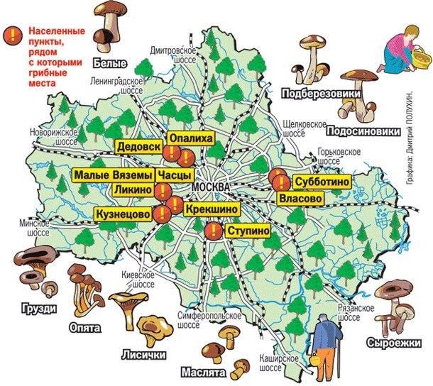 Карта грибных мест Московской области