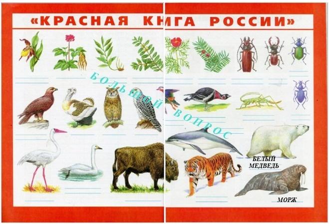 животные арктических пустынь крансая книга россии