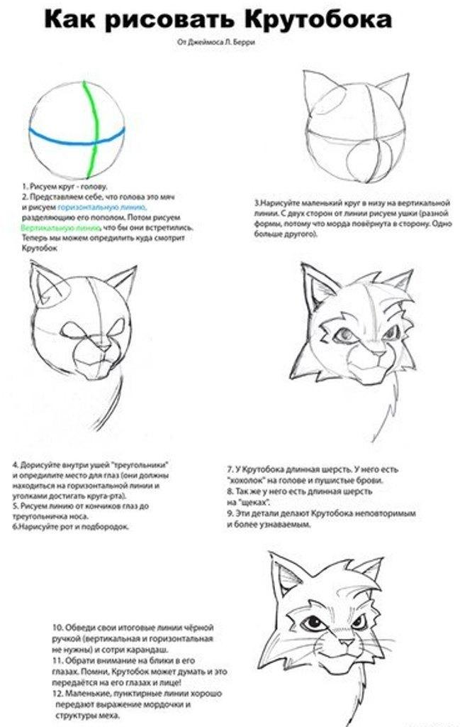 Как нарисовать бича коты воители поэтапно