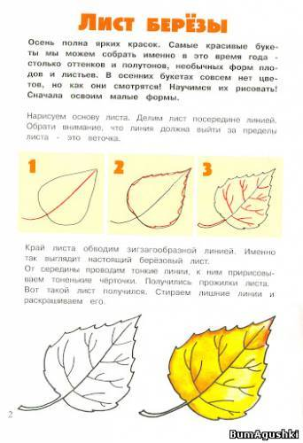 Как нарисовать берёзу поэтапно для начинающих