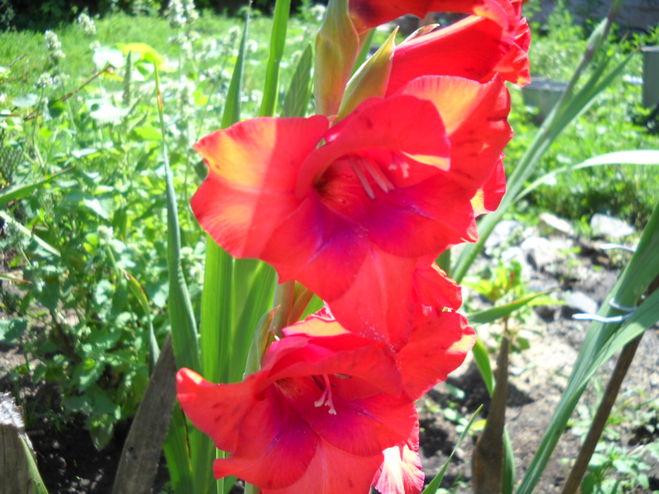 Какие цветы дарить дарят на 9 мая